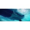 Лодка RIB Fortis 450